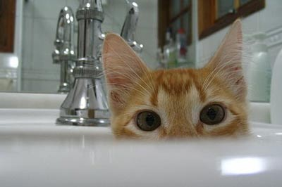 Orange tabby hiding in bathroom sink with only big eyes showing.