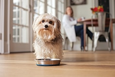 Dog standing over metal food dish in the kitchen